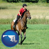 maryland map icon and an English-style rider atop a handsome brown horse