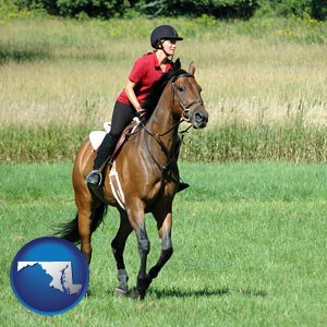 an English-style rider atop a handsome brown horse - with Maryland icon