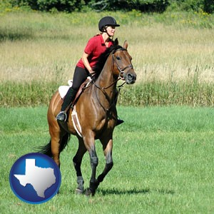 an English-style rider atop a handsome brown horse - with Texas icon