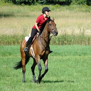 an English-style rider atop a handsome brown horse